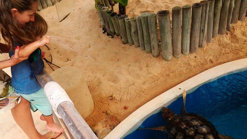 Projeto Tamar Praia do Forte
