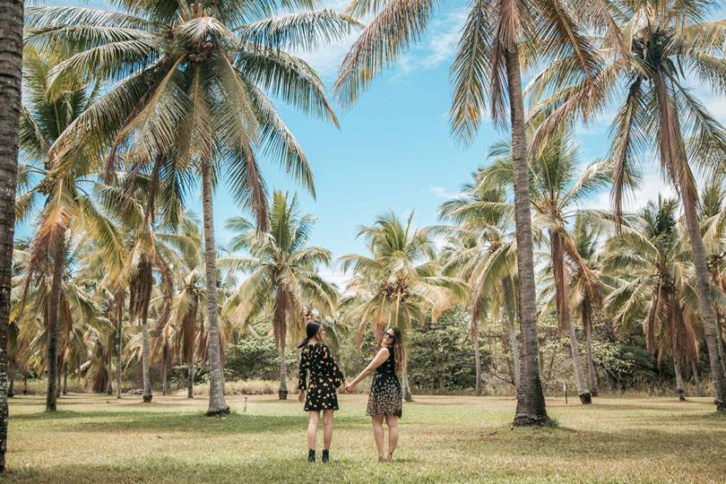 O que fazer em Cairs - Thala Beach Nature Reserve